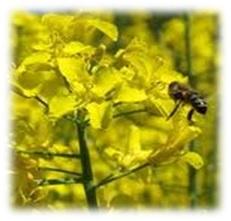 repce Virágok méze