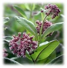 selyemfu Virágok méze