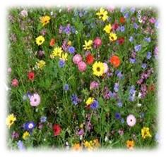 vegyes Virágok méze